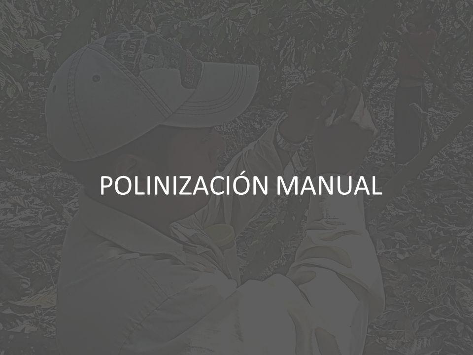 POLINIZACIÓN MANUAL