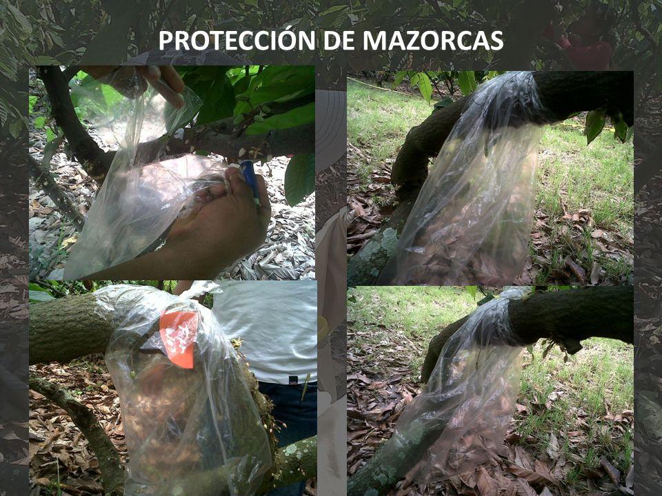 PROTECCIÓN DE MAZORCAS