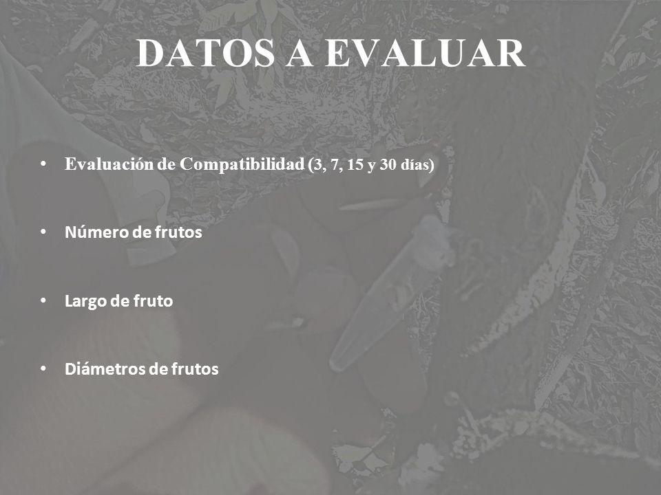 DATOS A EVALUAR Evaluación de Compatibilidad ( 3, 7, 15 y 30 días) Número de frutos Largo de fruto Diámetros de frutos