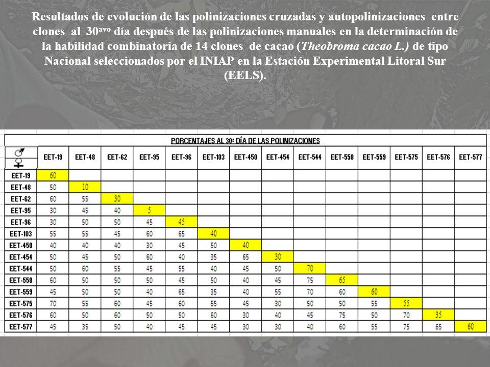 Resultados de evolución de las polinizaciones cruzadas y autopolinizaciones entre clones al 30 avo día después de las polinizaciones manuales en la de