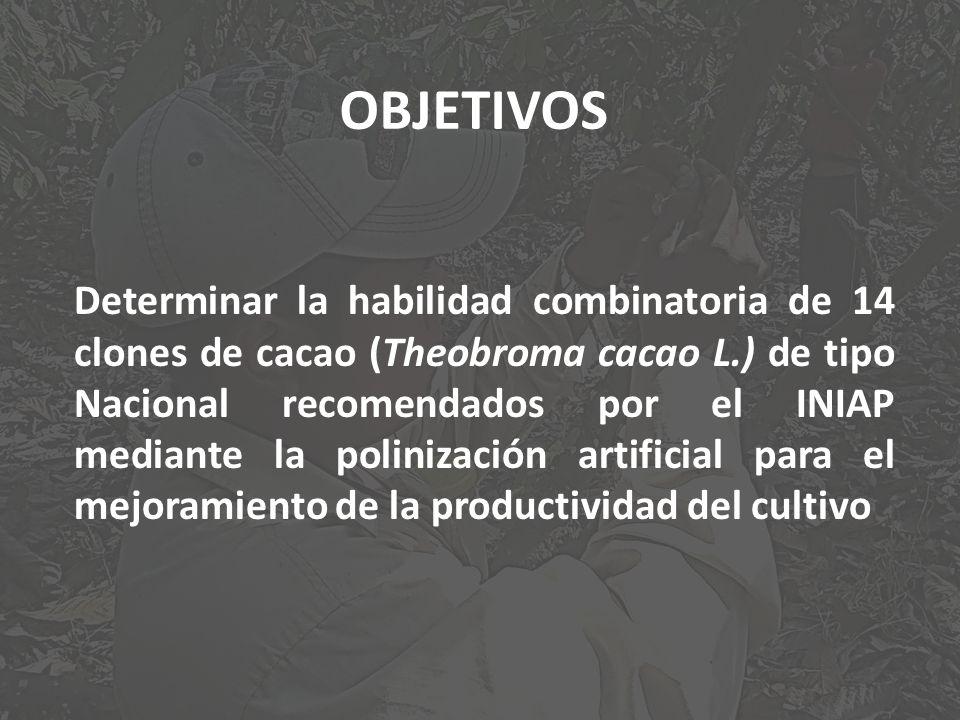 OBJETIVOS Determinar la habilidad combinatoria de 14 clones de cacao (Theobroma cacao L.) de tipo Nacional recomendados por el INIAP mediante la polin