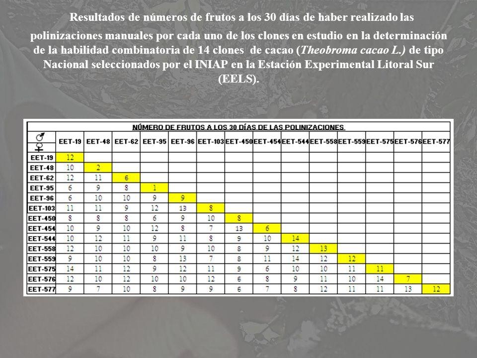 Resultados de números de frutos a los 30 días de haber realizado las polinizaciones manuales por cada uno de los clones en estudio en la determinación
