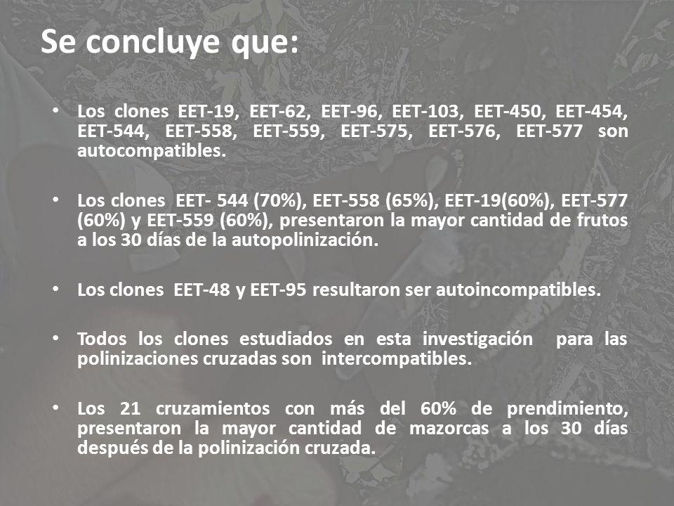 Se concluye que: Los clones EET-19, EET-62, EET-96, EET-103, EET-450, EET-454, EET-544, EET-558, EET-559, EET-575, EET-576, EET-577 son autocompatible