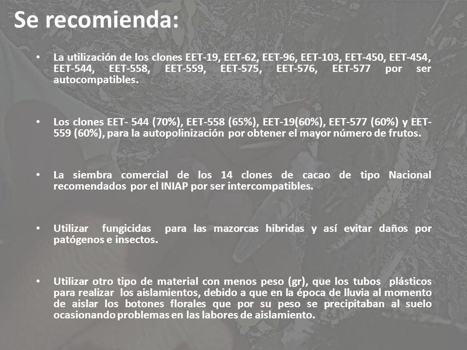 Se recomienda: La utilización de los clones EET-19, EET-62, EET-96, EET-103, EET-450, EET-454, EET-544, EET-558, EET-559, EET-575, EET-576, EET-577 po