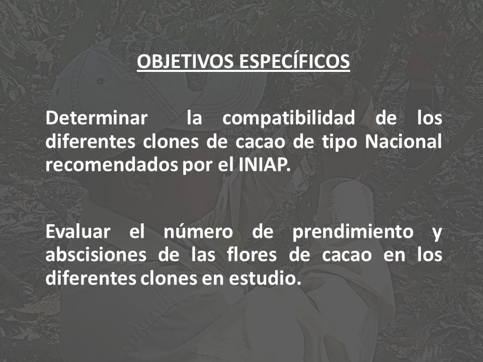 OBJETIVOS ESPECÍFICOS Determinar la compatibilidad de los diferentes clones de cacao de tipo Nacional recomendados por el INIAP. Evaluar el número de