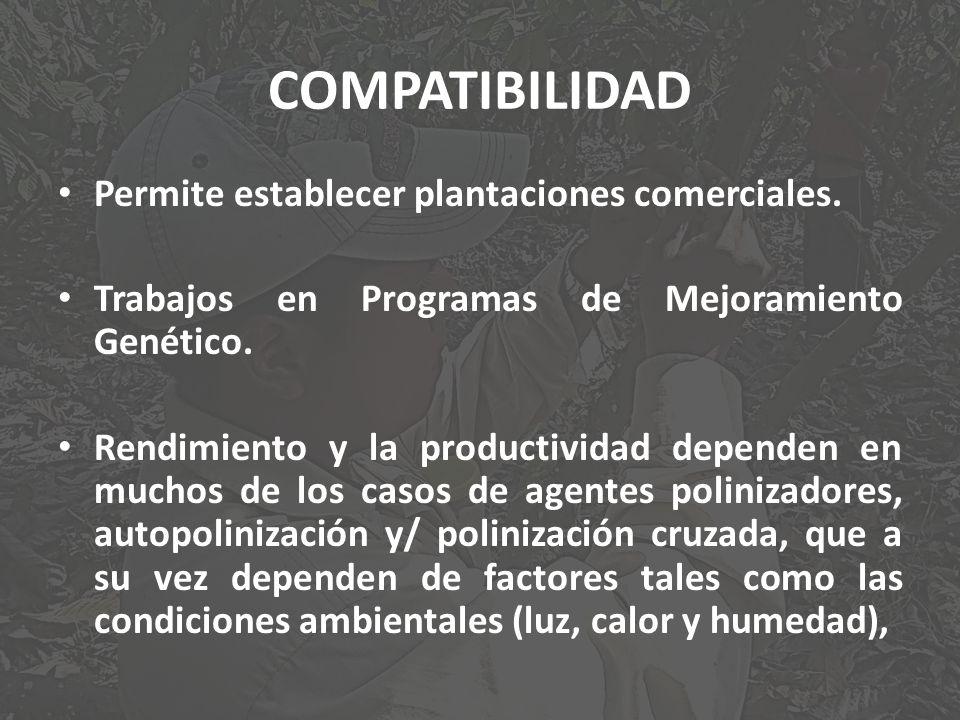 COMPATIBILIDAD Permite establecer plantaciones comerciales. Trabajos en Programas de Mejoramiento Genético. Rendimiento y la productividad dependen en