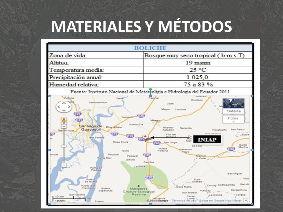 MATERIALES Y MÉTODOS UBICACIÓN DEL LUGAR DE INVESTIGACIÓN