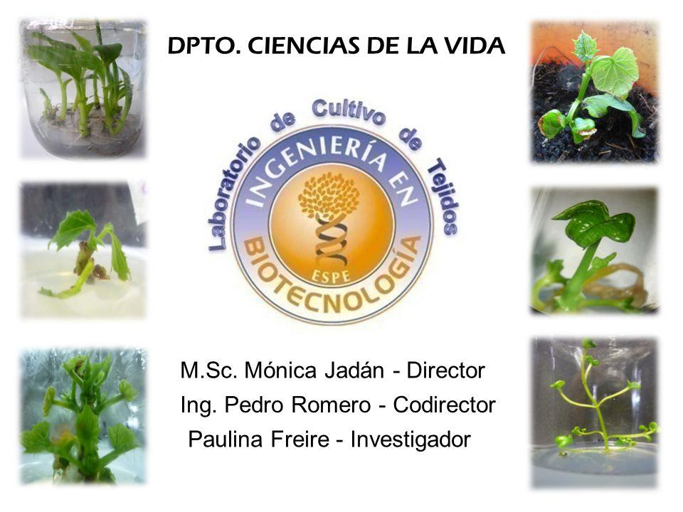 DPTO. CIENCIAS DE LA VIDA M.Sc. Mónica Jadán - Director Ing. Pedro Romero - Codirector Paulina Freire - Investigador