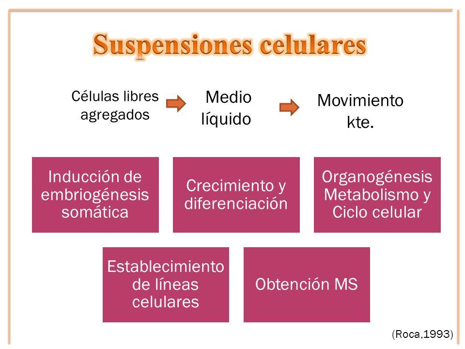 Movimiento kte. Células libres agregados Medio líquido (Roca,1993) Inducción de embriogénesis somática Crecimiento y diferenciación Organogénesis Meta