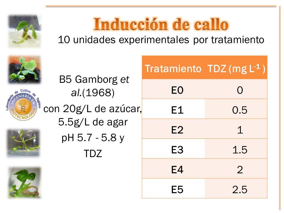 TratamientoTDZ (mg L -1 ) E00 E10.5 E21 E31.5 E42 E52.5 B5 Gamborg et al.(1968) con 20g/L de azúcar, 5.5g/L de agar pH 5.7 - 5.8 y TDZ