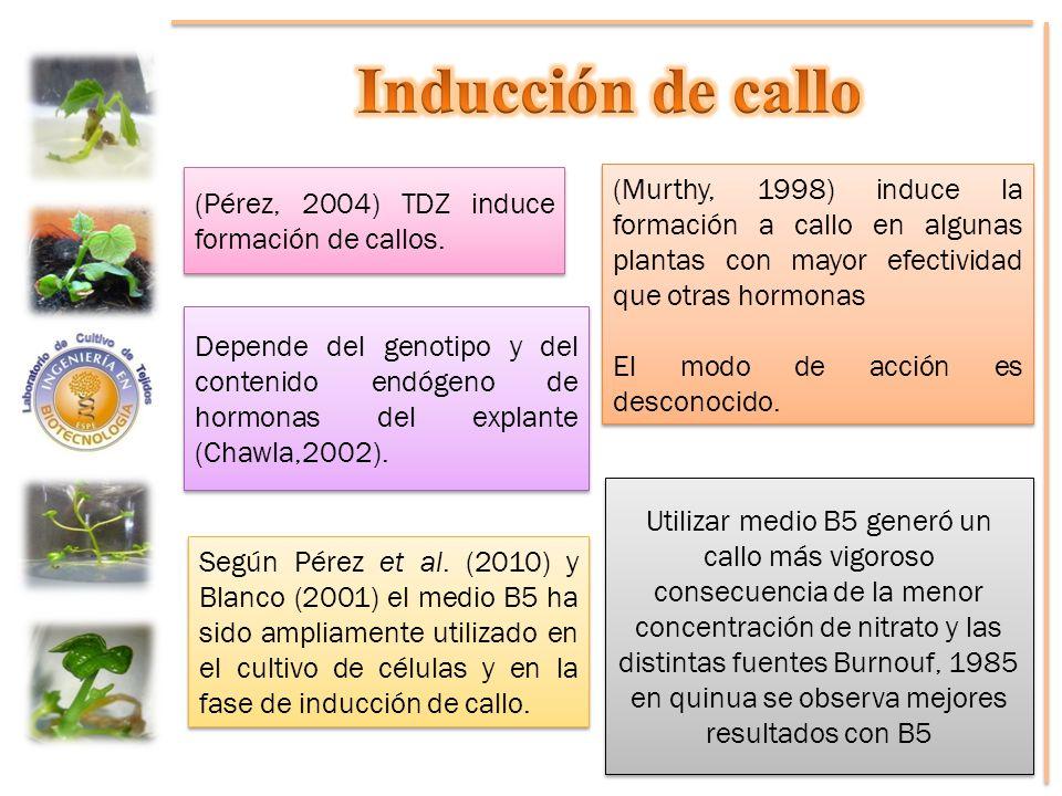 (Pérez, 2004) TDZ induce formación de callos. (Murthy, 1998) induce la formación a callo en algunas plantas con mayor efectividad que otras hormonas E