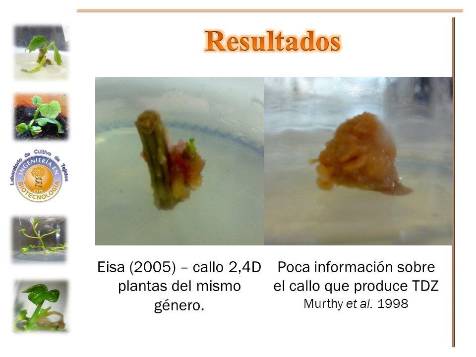 Eisa (2005) – callo 2,4D plantas del mismo género. Poca información sobre el callo que produce TDZ Murthy et al. 1998