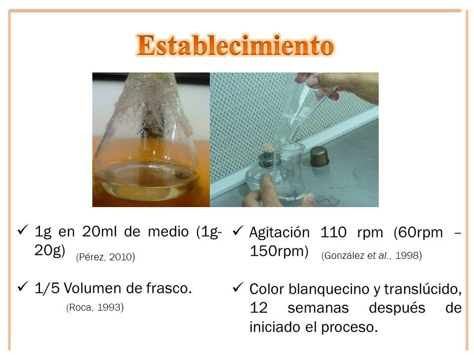 Agitación 110 rpm (60rpm – 150rpm) Color blanquecino y translúcido, 12 semanas después de iniciado el proceso. 1g en 20ml de medio (1g- 20g) 1/5 Volum
