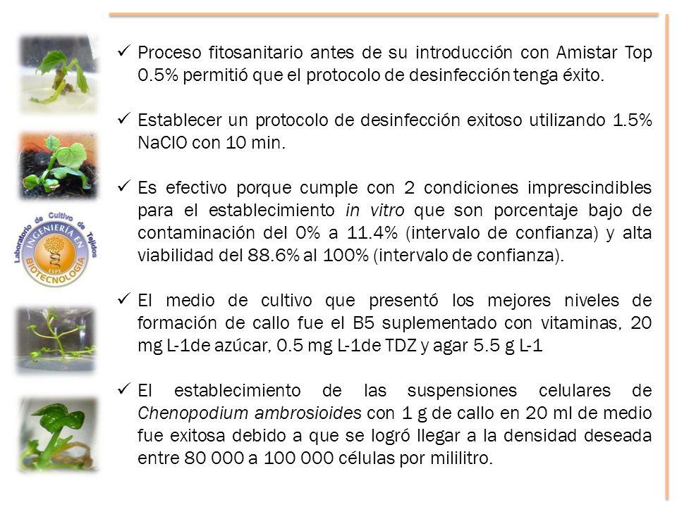 Proceso fitosanitario antes de su introducción con Amistar Top 0.5% permitió que el protocolo de desinfección tenga éxito.