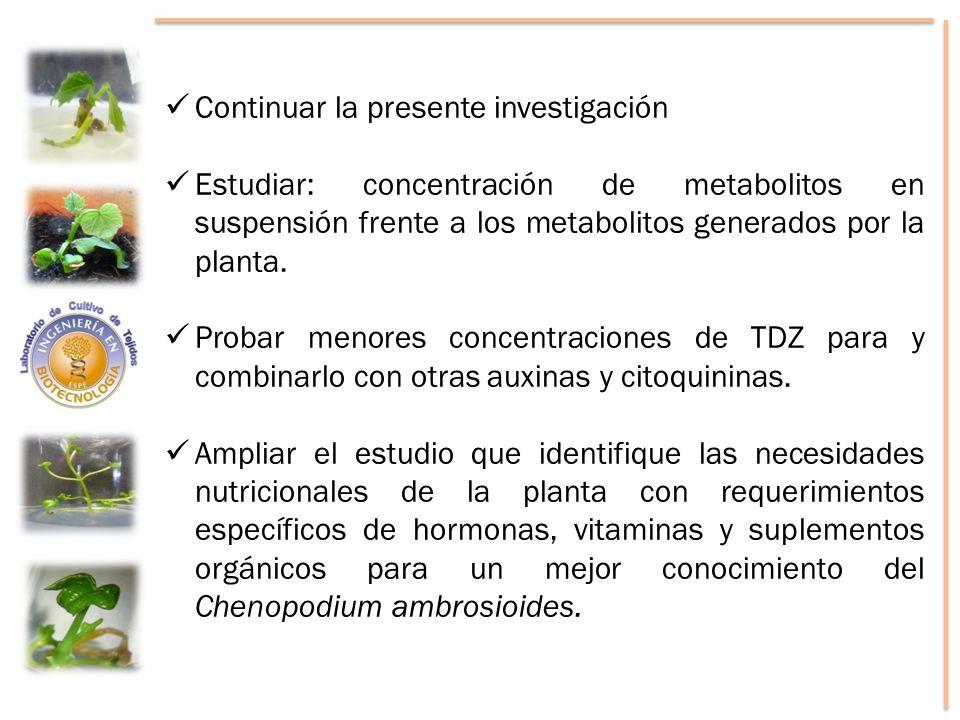 Continuar la presente investigación Estudiar: concentración de metabolitos en suspensión frente a los metabolitos generados por la planta. Probar meno