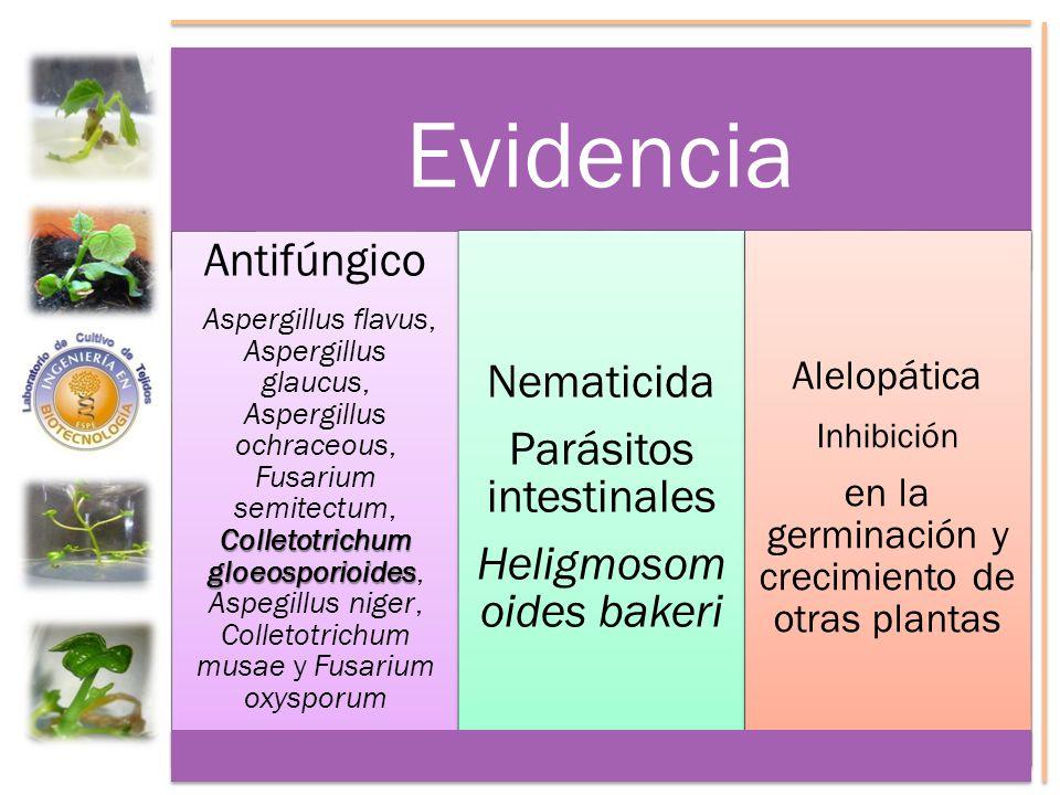 Evidencia Antifúngico Colletotrichum gloeosporioides Aspergillus flavus, Aspergillus glaucus, Aspergillus ochraceous, Fusarium semitectum, Colletotric