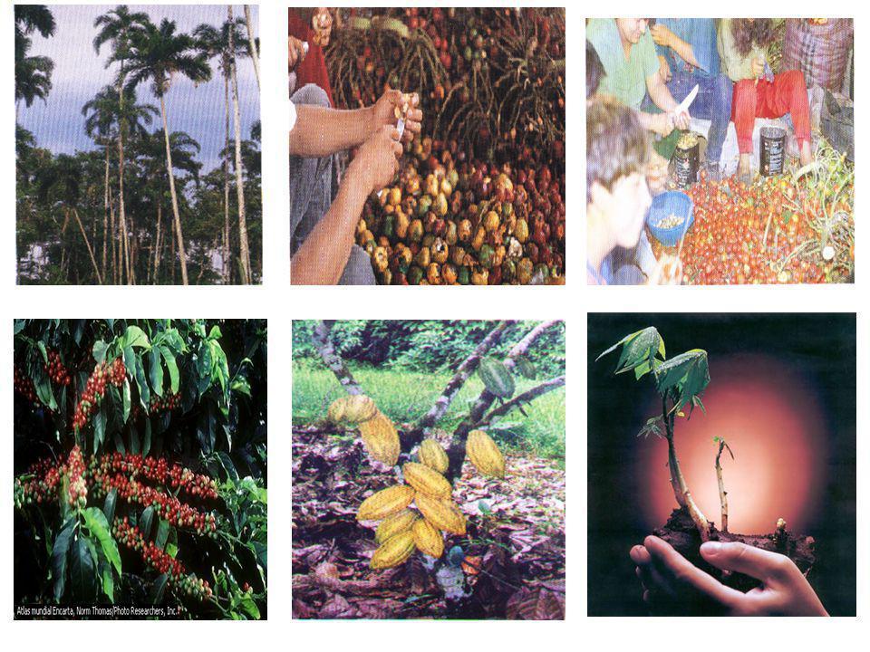 Microambiente El ámbito de acción de la Red, se define en los diez primeros años que constituye la educación básica rural, de acuerdo a lo establecido en el Sistema Nacional de Educación.