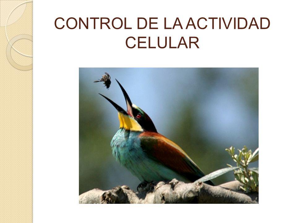 CONTROL DE LA ACTIVIDAD CELULAR