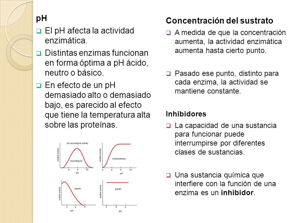 pH El pH afecta la actividad enzimática. Distintas enzimas funcionan en forma óptima a pH ácido, neutro o básico. En efecto de un pH demasiado alto o
