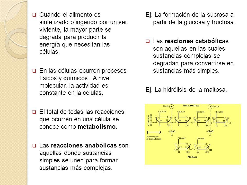 Los factores que afectan la actividad enzimática Las enzimas son proteínas y en las proteínas, la estructura determina la función.