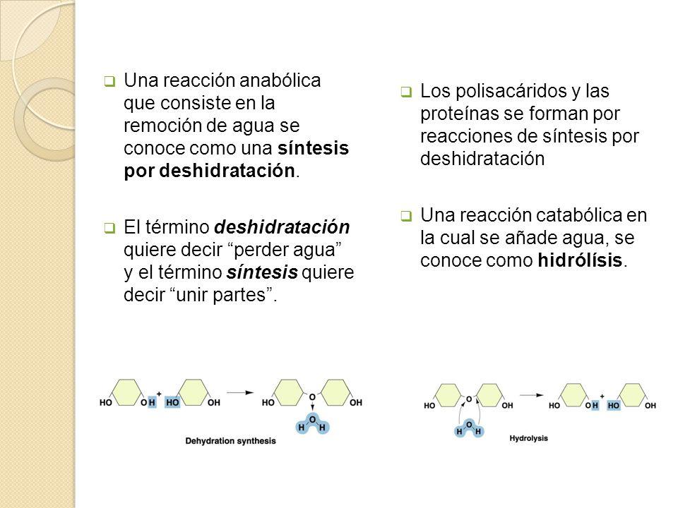 El control de las reacciones celulares Reacción endergónica Es una reacción química que necesita o utiliza energía.