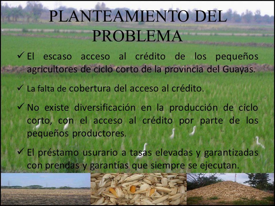 PLANTEAMIENTO DEL PROBLEMA El escaso acceso al crédito de los pequeños agricultores de ciclo corto de la provincia del Guayas. La falta de cobertura d