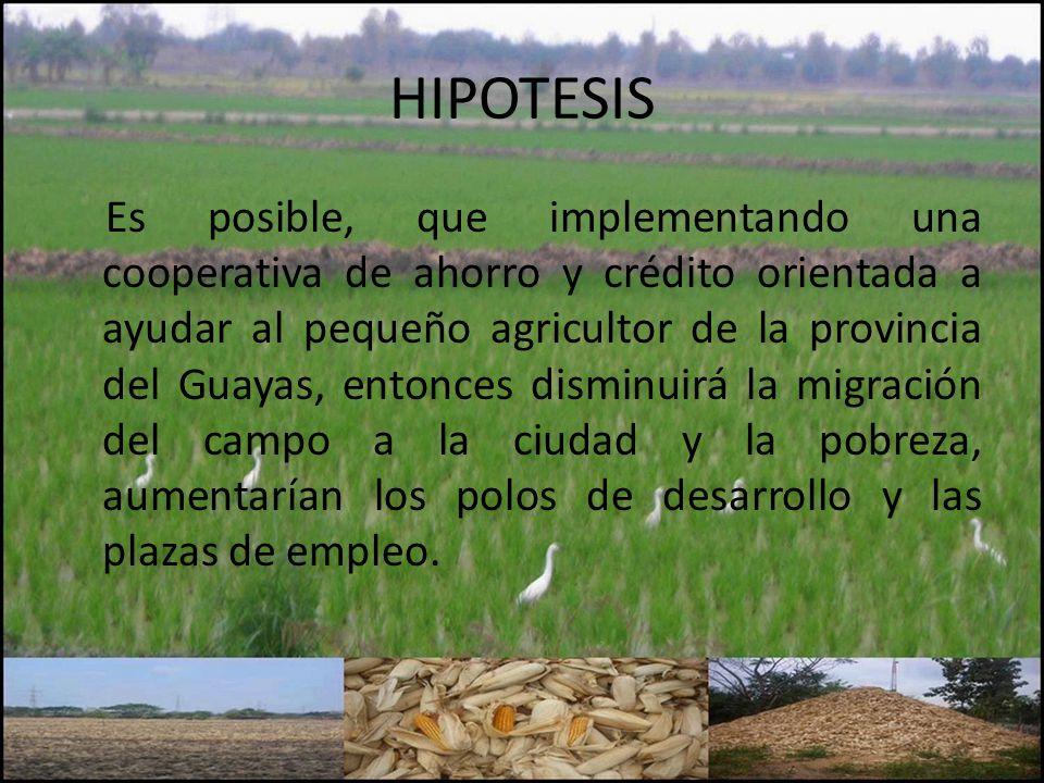 HIPOTESIS Es posible, que implementando una cooperativa de ahorro y crédito orientada a ayudar al pequeño agricultor de la provincia del Guayas, entonces disminuirá la migración del campo a la ciudad y la pobreza, aumentarían los polos de desarrollo y las plazas de empleo.