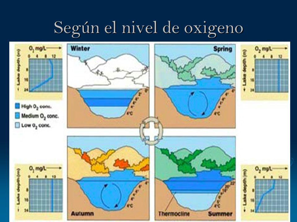 Según el nivel de oxigeno