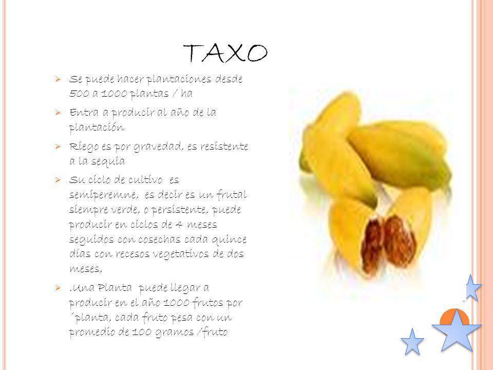 TAXO Se puede hacer plantaciones desde 500 a 1000 plantas / ha Entra a producir al año de la plantación Riego es por gravedad, es resistente a la sequ