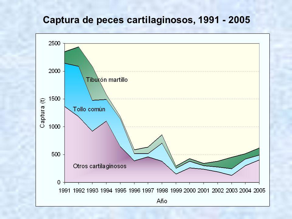 Captura de peces cartilaginosos, 1991 - 2005