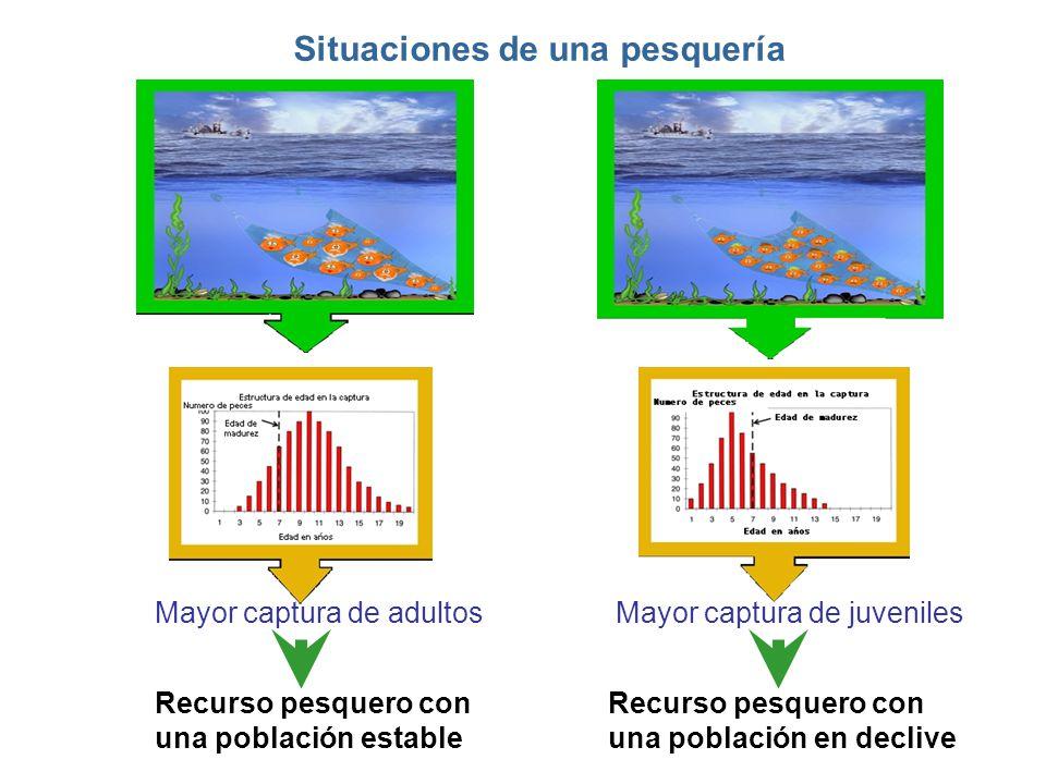 Mayor captura de adultosMayor captura de juveniles Recurso pesquero con una población estable Recurso pesquero con una población en declive Situacione