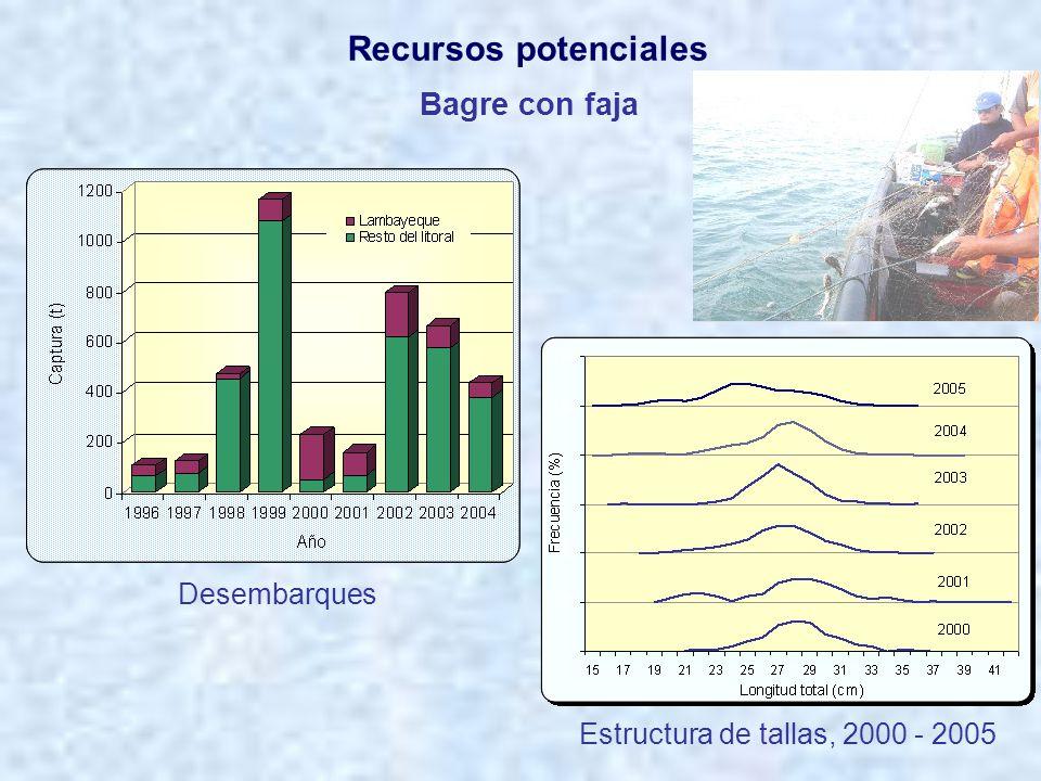 Anguila común Distribución de tallas Área de distribución