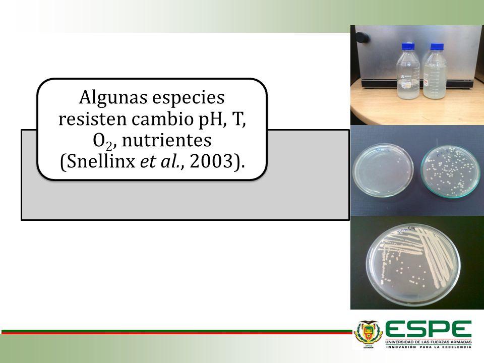 Algunas especies resisten cambio pH, T, O2, nutrientes (Snellinx et al., 2003).