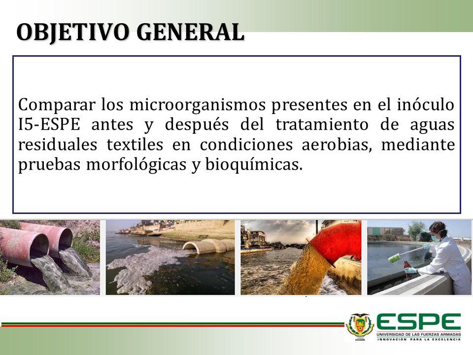 Comparar los microorganismos presentes en el inóculo I5-ESPE antes y después del tratamiento de aguas residuales textiles en condiciones aerobias, med