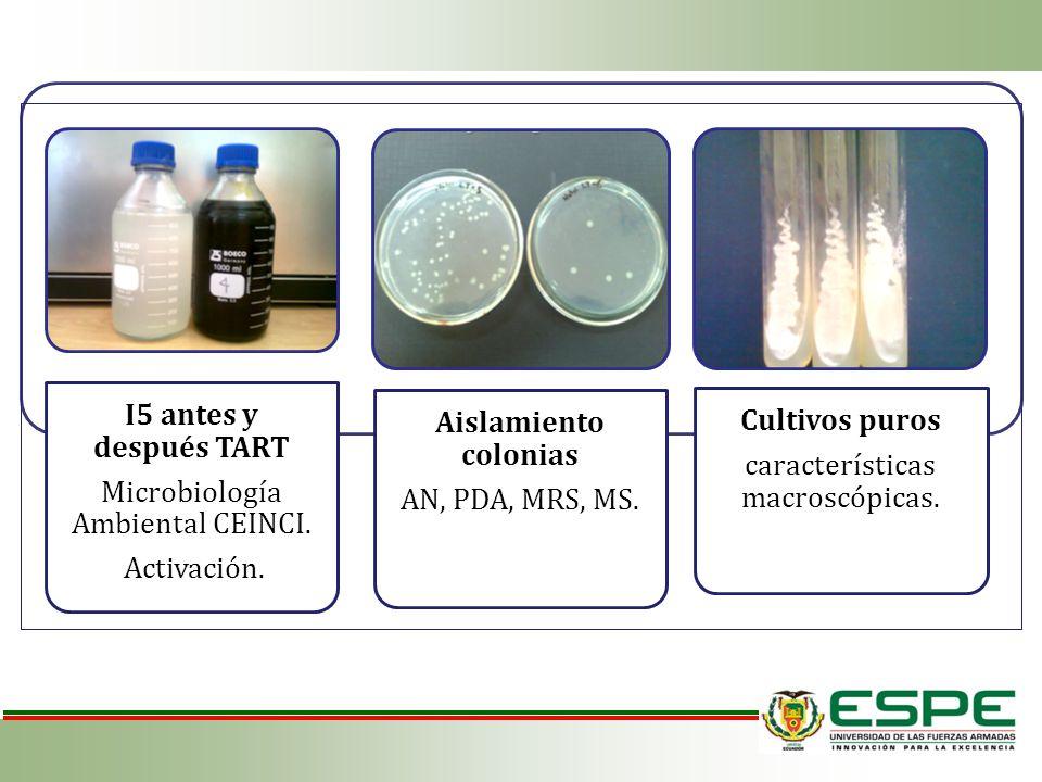 I5 antes y después TART Microbiología Ambiental CEINCI. Activación. Aislamiento colonias AN, PDA, MRS, MS. Cultivos puros características macroscópica