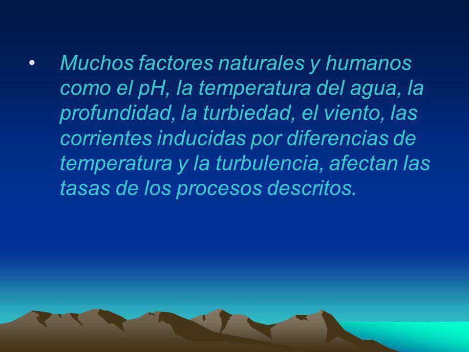 Muchos factores naturales y humanos como el pH, la temperatura del agua, la profundidad, la turbiedad, el viento, las corrientes inducidas por diferen