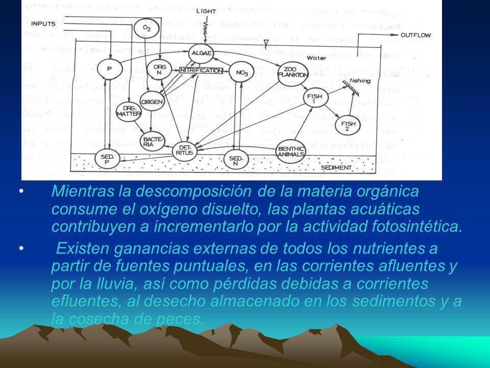 Mientras la descomposición de la materia orgánica consume el oxígeno disuelto, las plantas acuáticas contribuyen a incrementarlo por la actividad foto