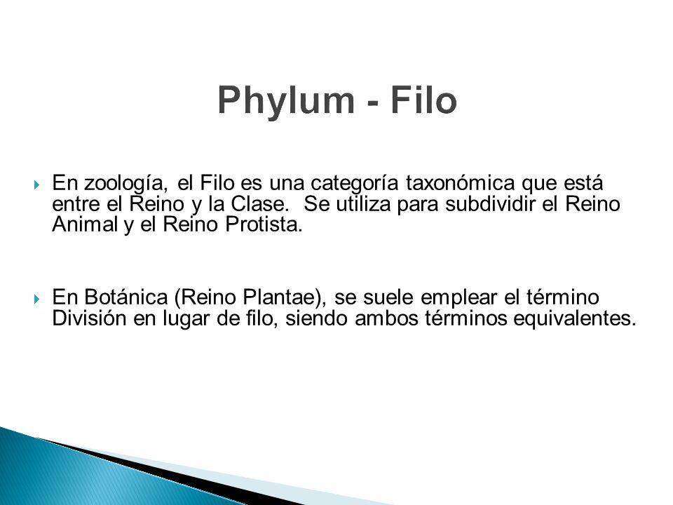 En zoología, el Filo es una categoría taxonómica que está entre el Reino y la Clase. Se utiliza para subdividir el Reino Animal y el Reino Protista. E