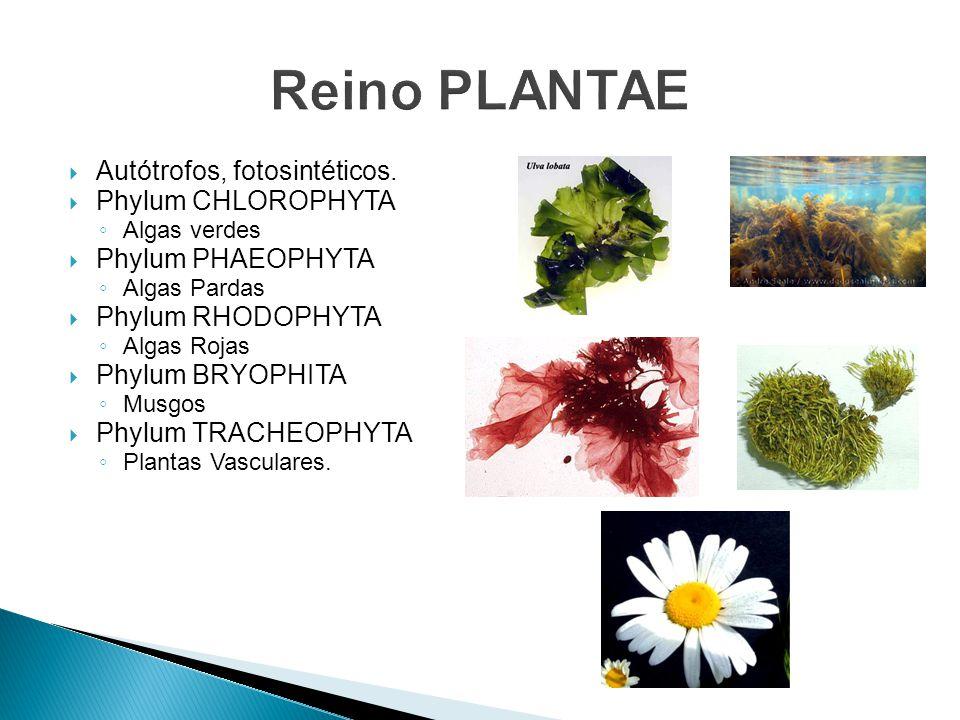 Autótrofos, fotosintéticos.