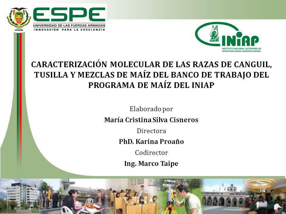 CARACTERIZACIÓN MOLECULAR DE LAS RAZAS DE CANGUIL, TUSILLA Y MEZCLAS DE MAÍZ DEL BANCO DE TRABAJO DEL PROGRAMA DE MAÍZ DEL INIAP Elaborado por María Cristina Silva Cisneros Directora PhD.