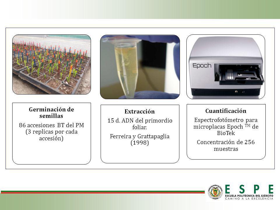 Germinación de semillas 86 accesiones BT del PM (3 replicas por cada accesión) Extracción 15 d.