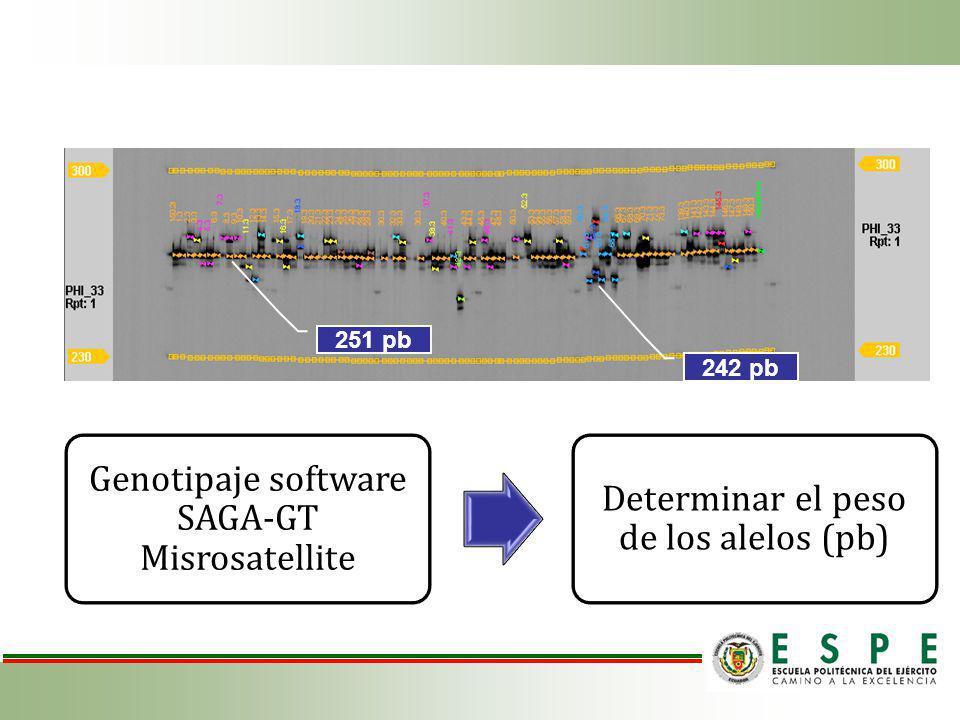 Genotipaje software SAGA-GT Misrosatellite Determinar el peso de los alelos (pb) 251 pb 242 pb