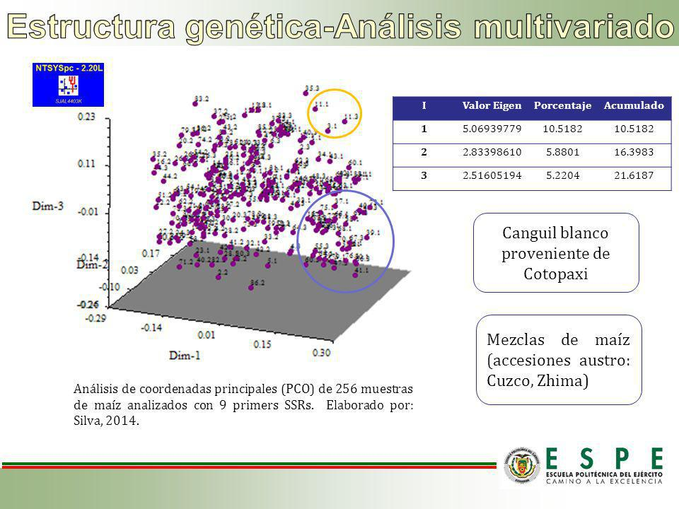 Análisis de coordenadas principales (PCO) de 256 muestras de maíz analizados con 9 primers SSRs.