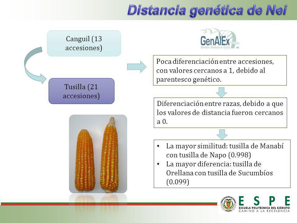 Poca diferenciación entre accesiones, con valores cercanos a 1, debido al parentesco genético.