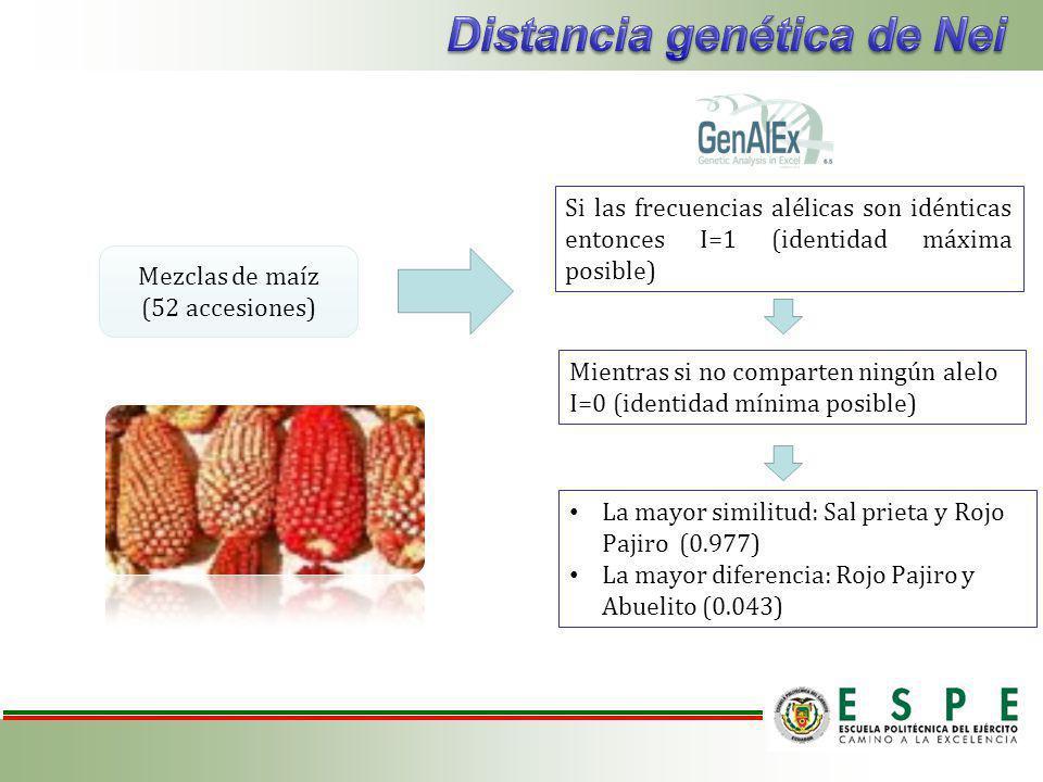 Si las frecuencias alélicas son idénticas entonces I=1 (identidad máxima posible) Mientras si no comparten ningún alelo I=0 (identidad mínima posible) La mayor similitud: Sal prieta y Rojo Pajiro (0.977) La mayor diferencia: Rojo Pajiro y Abuelito (0.043) Mezclas de maíz (52 accesiones)