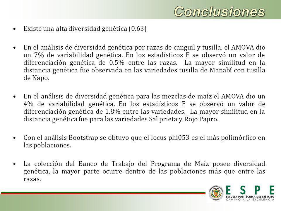 Existe una alta diversidad genética (0.63) En el análisis de diversidad genética por razas de canguil y tusilla, el AMOVA dio un 7% de variabilidad genética.