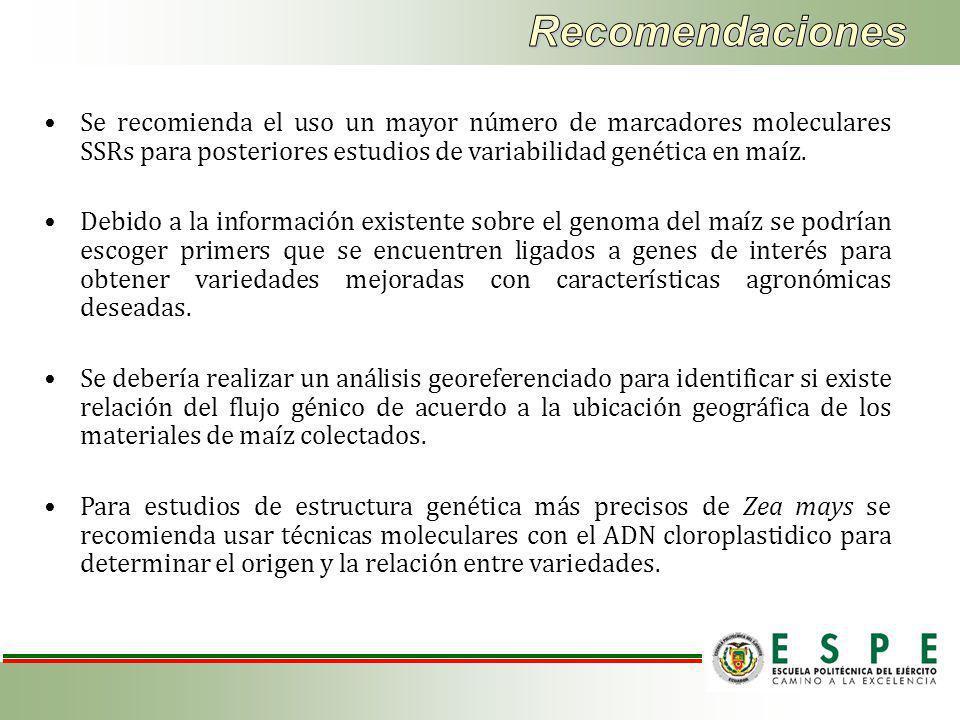 Se recomienda el uso un mayor número de marcadores moleculares SSRs para posteriores estudios de variabilidad genética en maíz.