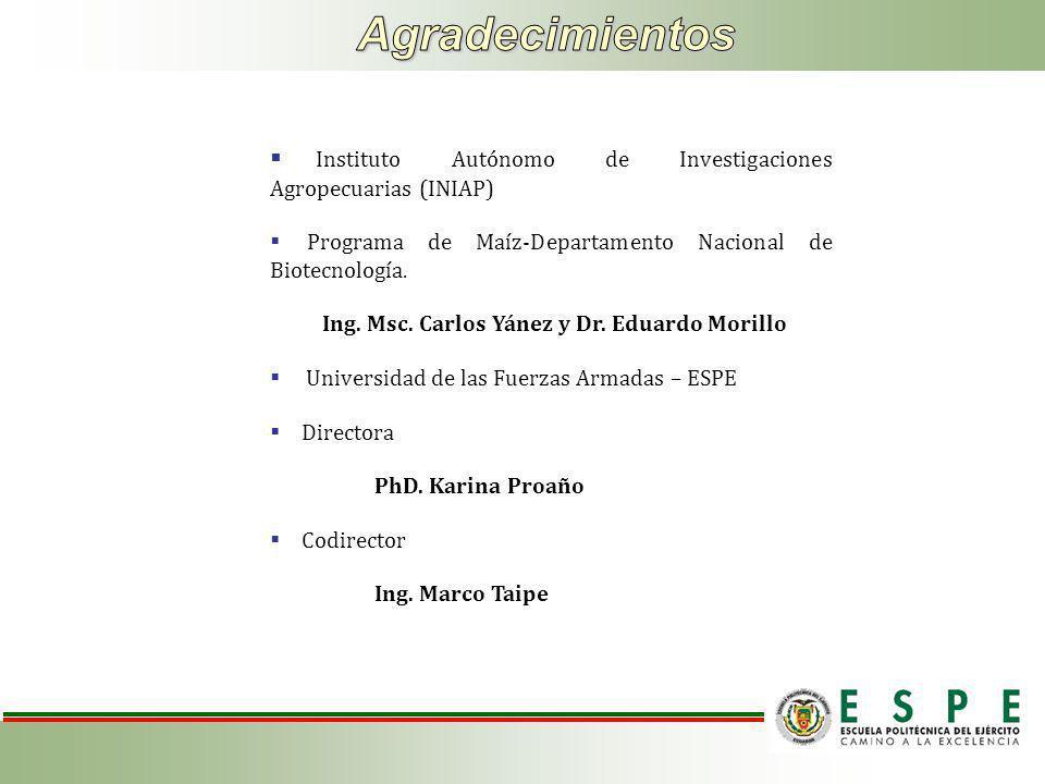Instituto Autónomo de Investigaciones Agropecuarias (INIAP) Programa de Maíz-Departamento Nacional de Biotecnología.