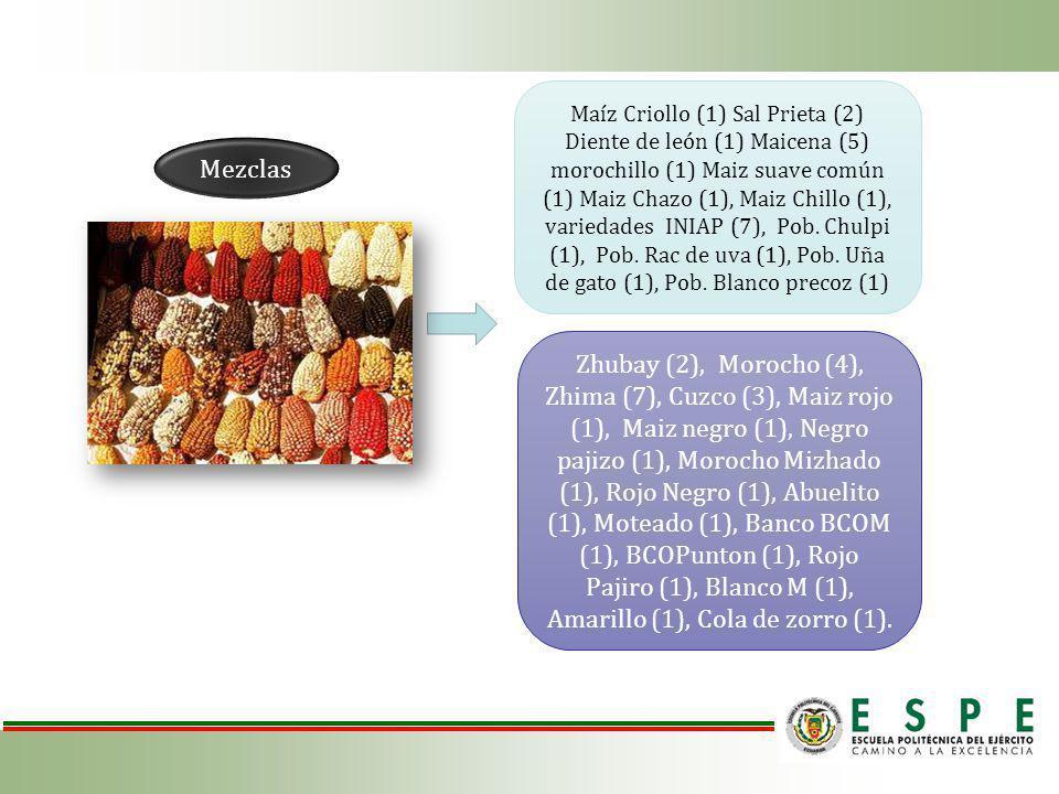 Zhubay (2), Morocho (4), Zhima (7), Cuzco (3), Maiz rojo (1), Maiz negro (1), Negro pajizo (1), Morocho Mizhado (1), Rojo Negro (1), Abuelito (1), Moteado (1), Banco BCOM (1), BCOPunton (1), Rojo Pajiro (1), Blanco M (1), Amarillo (1), Cola de zorro (1).