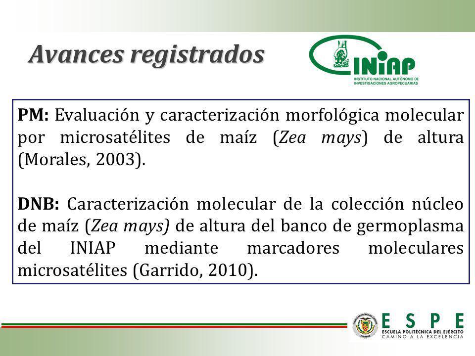 PM: Evaluación y caracterización morfológica molecular por microsatélites de maíz (Zea mays) de altura (Morales, 2003).